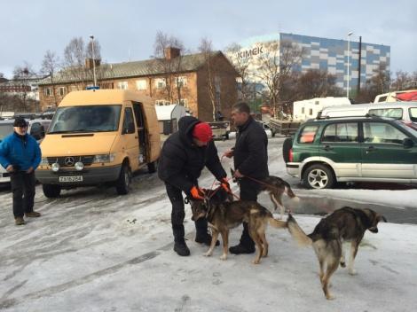 Handlerne har blant annet brukt ventetiden i Kirkenes til å lufte hundene.