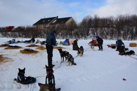 Hundene tas alltid prioritet én. Det er hundekjørerens første bud på kjøring. Her fra Varangerbotn, hvor det vanker en godbit før mat og slett. Foto: Ole Chr. Gulbrandsen