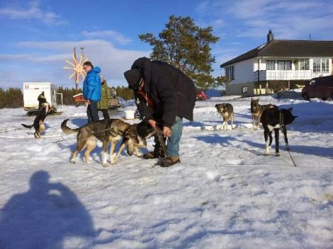 Hundene blir undersøkt av veterinærer. Foto: Birger Altmann