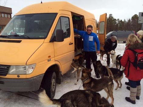 Hundene er ivrige etter å sette igang. Foto: Ole Christian Guldbrandsen