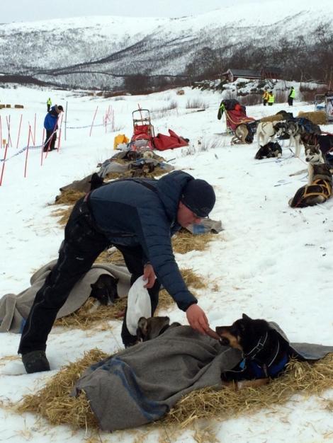 Dag Torulf steller med hundene i Levajok. Foto: Ole Chr. Guldbrandsen