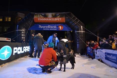 I mål i Finnmarksløpet. Det ble 5. plass! Hundene får belønning umiddelbart etter målgang. Foto: Ole Chr. Gulbrandsen