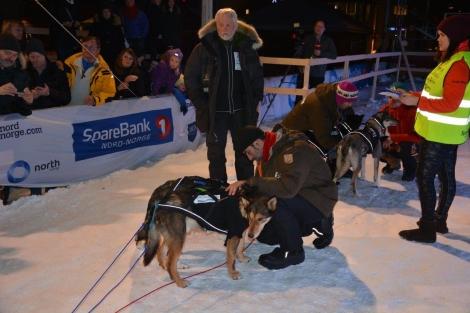 Vet-sjekk på hundene, mens Svein følger med. Foto: Ole Chr. Gulbrandsen