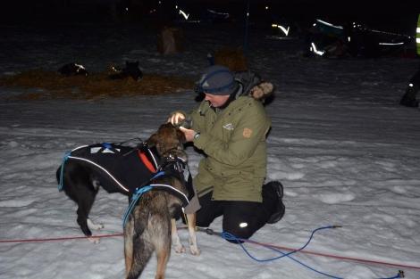 Veterinærene sjekker hundene i Neiden 2. Foto: Ole Chr. Gulbrandsen