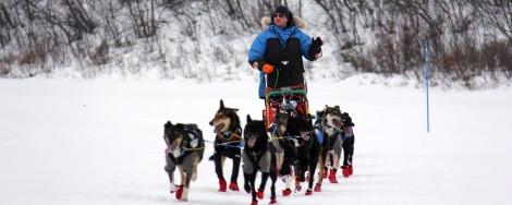 Dag Torulf på vei inn til sjekkpunkt Neiden under Finnmarksløpet 2014.