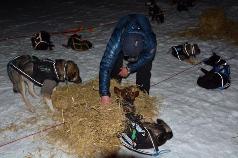 Hundene alltid først. Her ordner Dag Torulf seng til dem, så de har det varmt og godt. Foto: Ole Chr. Gulbrandsen