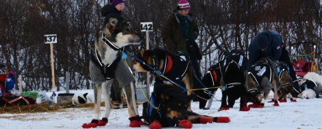 Spannet i Varangerbotn. Nå har Dag Torulf kjørt seg opp til 7. plass. Foto: Ole Chr. Gulbrandsen