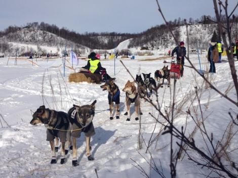 Spannet starter ut fra Neiden i Pasvik Trail.