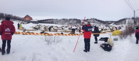 Mye aktivitet i Neiden. Foto: Pål Johannessen