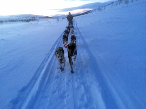 På 70 kilometers treningstur. Det går unna innover Gukkesgurra.