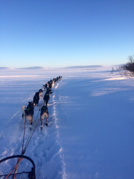 Med 21 sterke og friske alaska huskyer foran, går det unna.