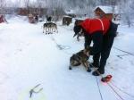 Tore gjør klar hundene før avgang. Foto: Ingrid Amundsen