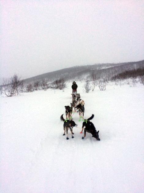 Ingrid på vei ut fra Veslemoenmed ti hunder i spannet.