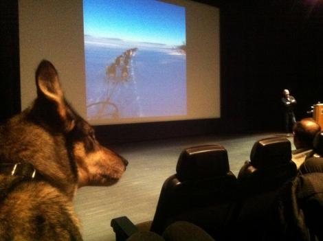 Dina følger med mens far står på scenen og snakker. Foto. Ingrid Amundsen