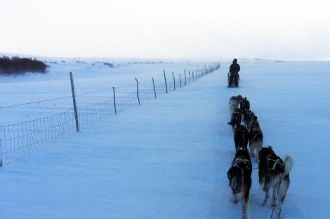 På tur innover vidda. Litt kjølig, men ellers flott. Og hundene trekker godt. Foto Ingrid Amundsen