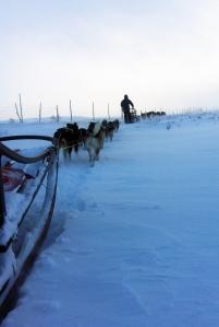 Dag Torulf forsvinner over bakketoppen. Dina og Petoska drar godt i led.