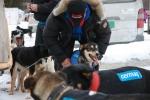 Stallo får på seg trøya. I år går han Finnmarksløpet for første gang. Foto: Eirik Palm