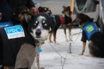Langbein er med os i Finnmarksløpet for første gang. Foto: Eirik Palm