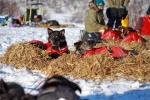 Petoska og Shep slapper av, mens veterinærene sjekker lagkameratene. Foto: Eirik Palm