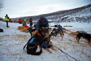 Petoska venter på halm etter innsatsen. Foto: Eirik Palm