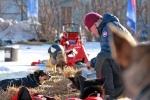 Hundene får mat før kavgangen fra Kirkenes. Foto: Eirik Palm
