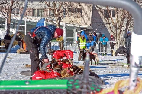 Dag Torulf sørger for at hundene får i seg nok næring før neste etappe. Foto: Eirik Palm