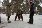 Shaien blir sjekket av veterinæren i Karasjok. Han bestemmer at hun ikke får fortsette. Foto: Eirik Palm
