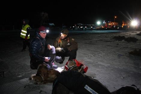 Veterinæren sjekker hundene sammen med Dag Torulf rett etter innkomst onsdag kveld. Foto: Eirik Palm