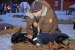 Chevy har blitt svært så interessert i veterinæren. Her blir hun undersøkt sammen med Silla. Foto. Eirik Palm