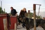 Stell i hundegården, mens Strid følger med: