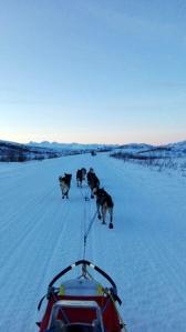 Kjøring langs Denali Highway. Foto: Karl-Erik Andersen