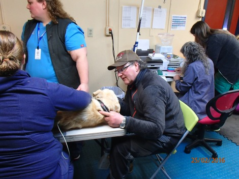 Hunder føler seg ikke alltid like trygg på bordet hos veterinæren. Da er det godt at far er der og passer på. Foto: Karl-Erik Andersen
